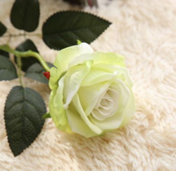 Artificial Flower Rose ,Light Green ,High quality Velvet ,A bunch with 10 heads ,Free Shipping to worldwide area. Momda recommended trustworthy Supplier.